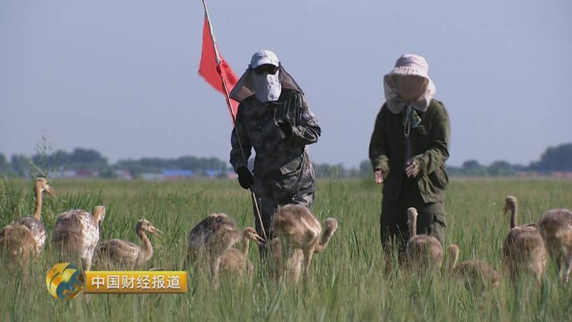 这些动物厉害了 蚕豆脱壳机国家将腾出14%国土面积给它们