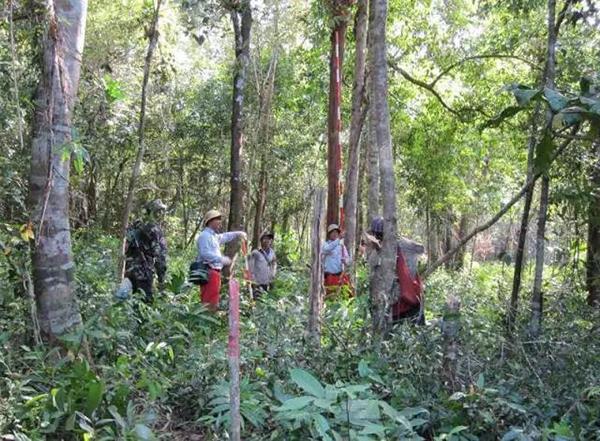 丛林勘测,有武装人员保护