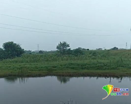 张雄家属在事发地拍下视频,视频显示,水塘就在高压线的底下,且周围没有任何标识。家属供图