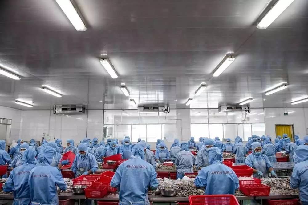 """▲材料图片:7月13日,越南一家食物加工厂内,工人口们正在处置惩罚鲜虾制品。近年来,作为""""越南之饭碗"""",湄公河三角洲衰亡了少量相似之食物加工企业,产值可达数百万美元。(法新社)"""
