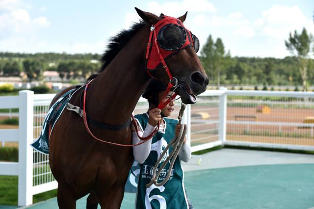 在山西省右玉县玉龙马园马匹亮相区,工作人员向观众展示马匹(7月29日摄)。 新华社记者詹彦摄