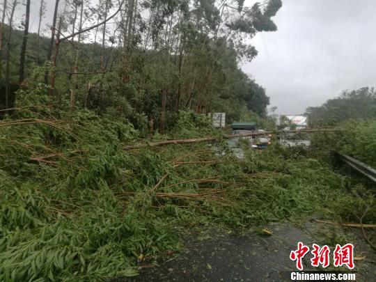 8月23日,在西部沿海高速,有大树倒下,占有路面 欧阳征朝 摄