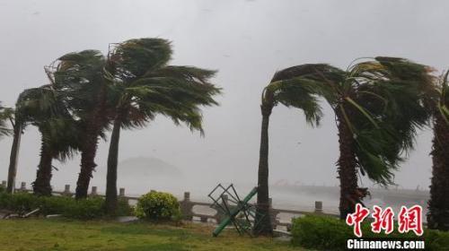 记者在情侣路等地看到,大雨中暴风吹得路边之大树不停摇摆,记者开之汽车也被吹得很难颠簸行驶。 邓媛雯 摄
