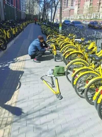 等待修复的共享单车一眼望不到尽头。