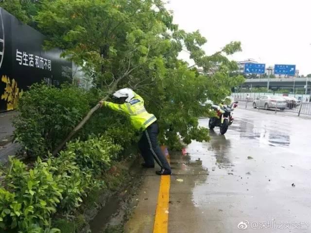 神秘男子冒台风砍树清路,仔细一看,竟是周润发!网友们炸锅了