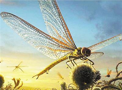 认识蜻蜓身体结构