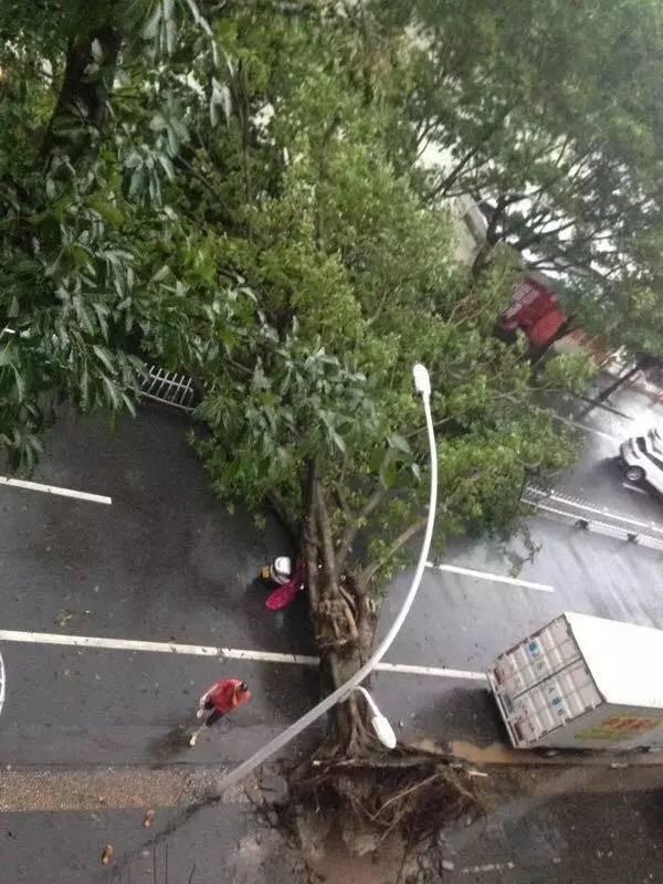 """刚刚!台风""""帕卡""""在台山东南沿海登陆!风力12级!珠三角普遍出现大到暴雨"""