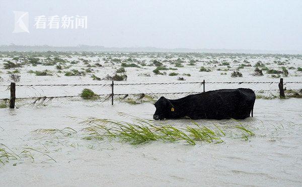 """飓风""""哈维""""引发洪水 狗狗被拴路边遭遗弃 浑身湿透等主人来"""