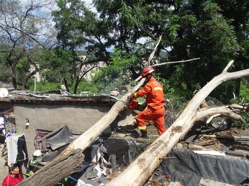 狂风刮倒大树 石景山支队锯树除隐患