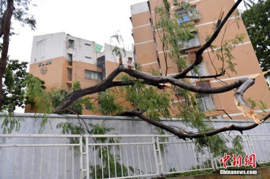 台风帕卡致广东等3省份受灾 直接经济损失3.1亿