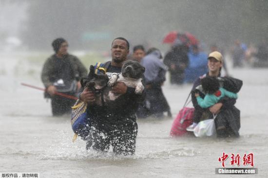 当地时间2017年8月28日,美国得克萨斯州,飓风过境带来大面积洪水,民众带着爱宠撤离灾区。