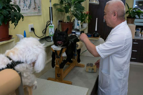西媒:西班牙禁用针灸疗法引争议 遭地方政府抵制