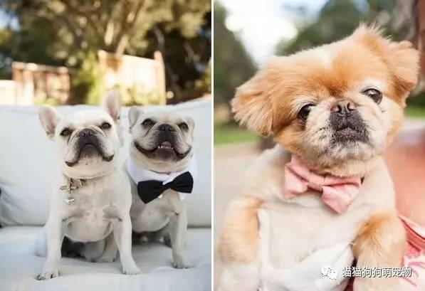 结婚也要有你的陪伴!