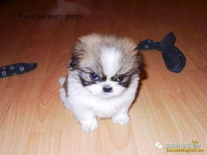 这些动物宝宝生气的样子也是那么可爱!