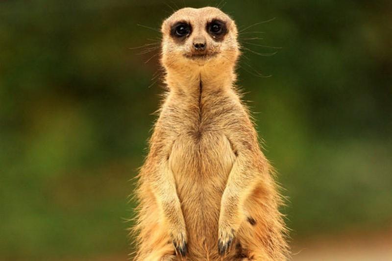 这些会摆pose的小动物 简直让人忍俊不禁