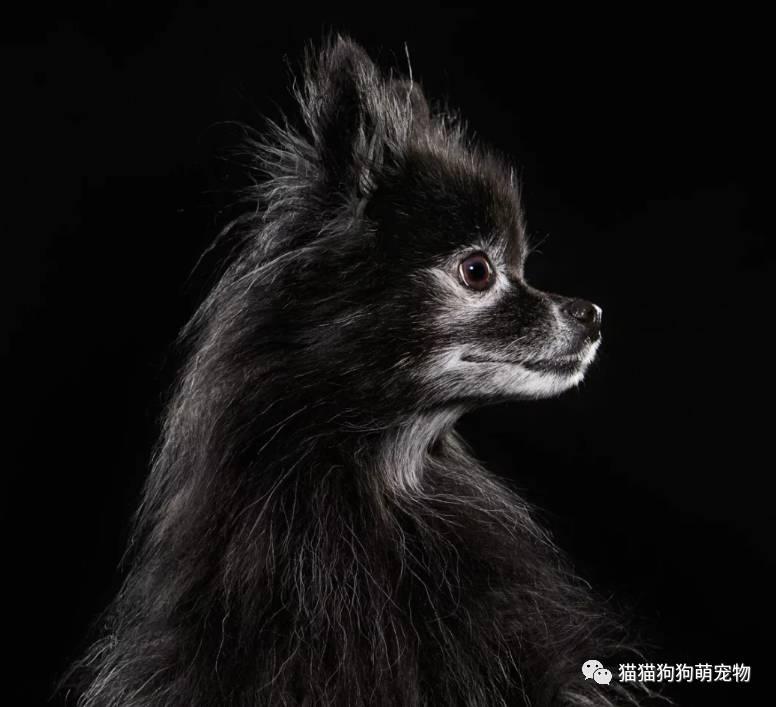 这些暗黑狗狗会融化你的心吗?
