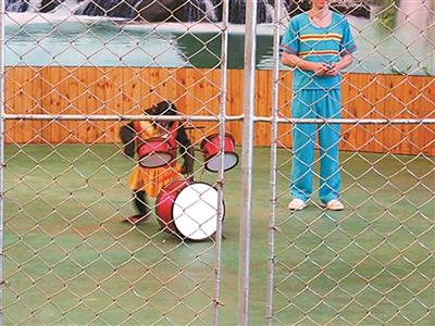 马戏团表演的节目。北京青年报 图