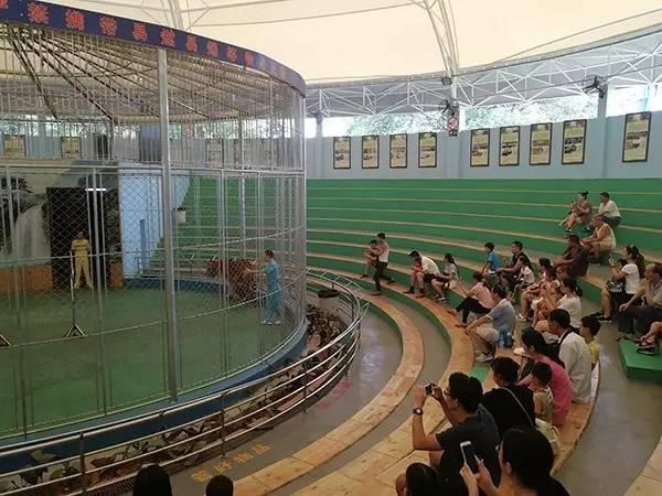 历时24年的马戏表演叫停遇阻 广州动物园回应:将依法劝退