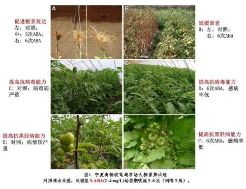 成都生物所脱落酸诱导植物抗病研究获得进展