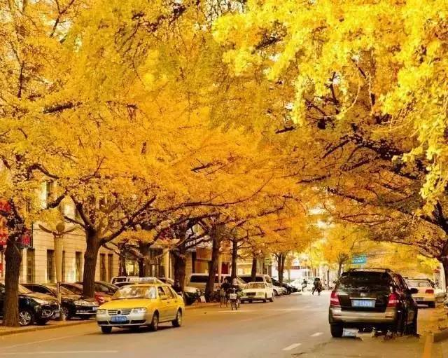 秋天的丹东,是最美的,拍些金黄的照片,每一张都是明信片……