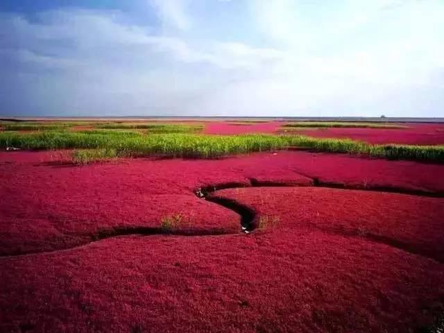 盘锦—红海滩景区上榜理由: