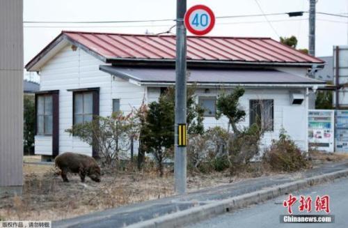 日媒:超2万日本3·11大地震灾民仍住临时安置房