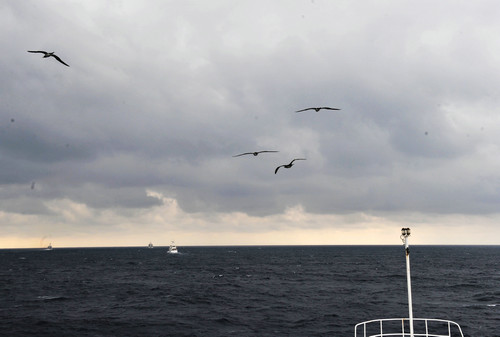 资料图片:中国海监船编队坚守在钓鱼岛海域进行常态化巡航。新华社记者 张建松 摄