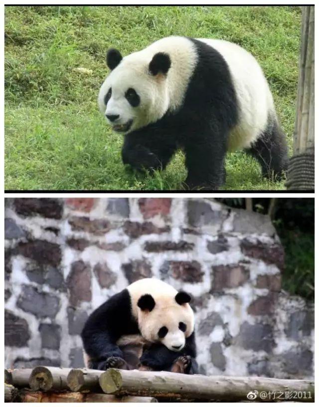 熊猫馆选址于沈阳自然条件最好的棋盘山风景区内,在沈阳森林动物园最
