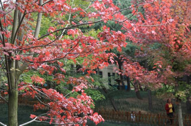 和家人一起到中山公园认识植物、拍摄靓照,这个最惬意的公益活动