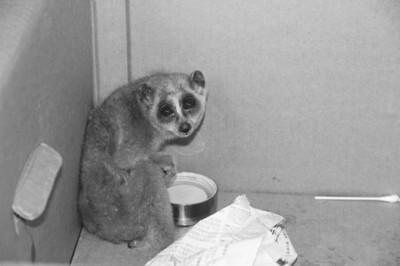 当时,民警看到小区楼下的路边有一只蜷缩的小动物,看起来像猴又像猫