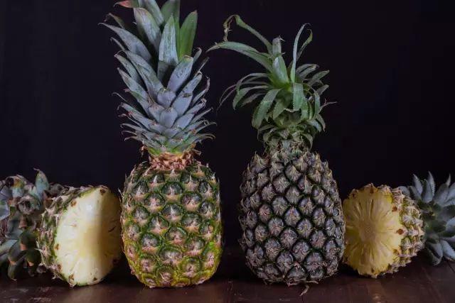 图左:凤梨   图右:菠萝 一般的凤梨酥内馅掺了80%以上的冬瓜,且凤梨馅大部分是用菠萝和普通凤梨做的,而微热山丘是用100%土凤梨制成。 Tips:  凤梨:产量少,做成凤梨酱甜酸可口,味道更好。 菠萝:产量多,做成菠萝酱相较凤梨更酸涩。