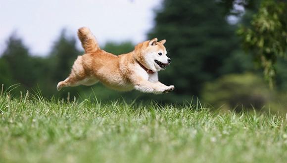 世界动物保护协会:给犬只接种疫苗可有效阻断狂犬病传播
