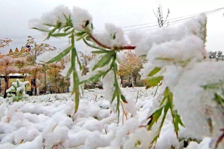 10月1日,新疆哈密,伊吾县街头的雪景