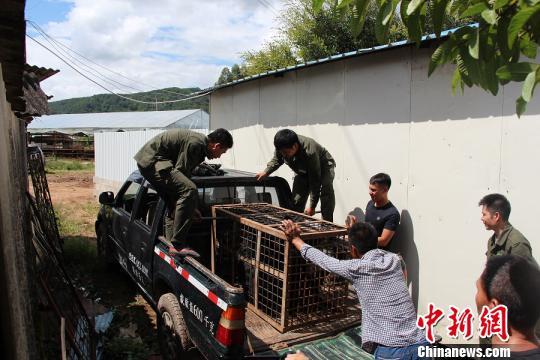 图为王某非法饲养的黑熊。宁洱县森林公安局供图