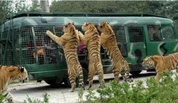 如何去太原动物园_太原动物园2期工程曝光 将建综合游乐