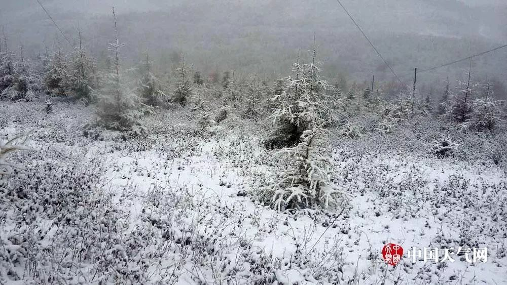 △10日早晨,门头沟灵山出现降雪,白雪皑皑。