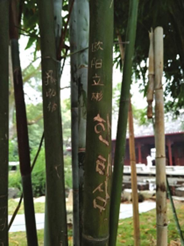 岳麓书院的竹林里很多竹子被刻了字,其中还有韩文。潇湘晨报网 图
