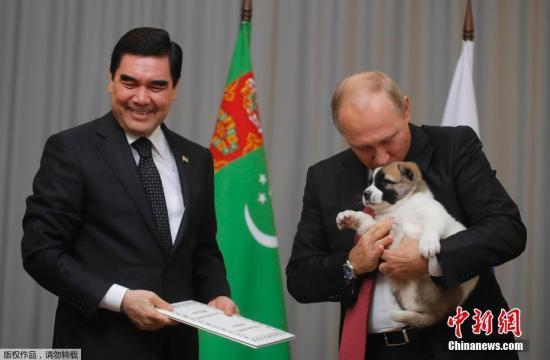 资料图:今年10月11日,普京与土库曼斯坦总统库尔班古力·别尔德穆哈梅多夫会面,获赠土库曼斯坦特有的阿拉拜犬。