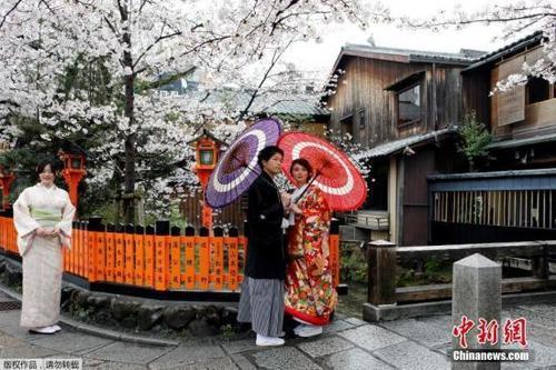 图:日本京都樱花盛放,大众身着跟服赏樱