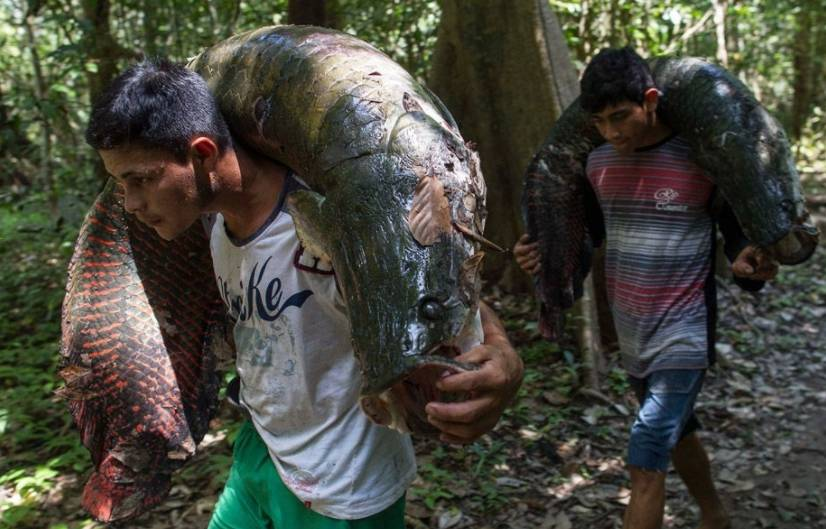 世界上最笨的大鱼,笨到需要政府立法保护它