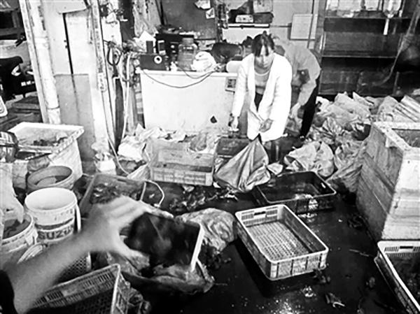 """环保志愿者报警后,商贩开始""""销毁""""虎纹蛙。北京青年报 图"""
