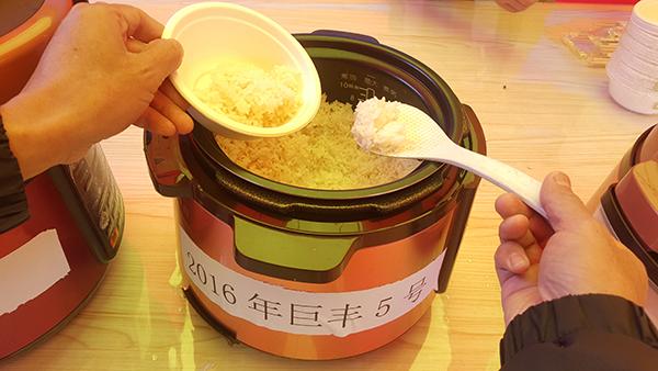 """巨型杂交稻""""巨丰5号""""。"""