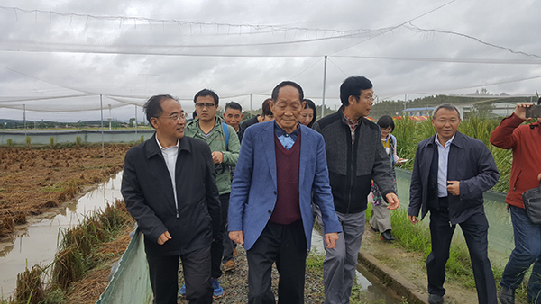 10月16日,袁隆平来到长沙县金井镇的巨型稻试验基地参观。 本文图均为 受访者供图