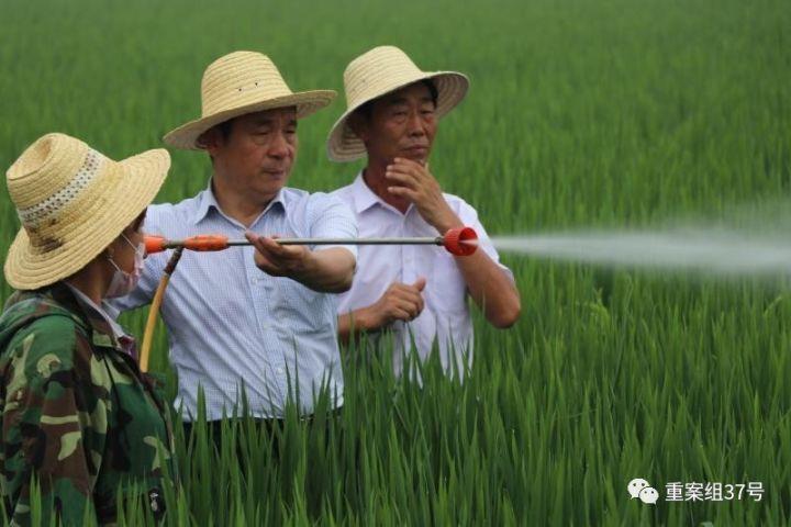 ▲农科院团队在检察水稻长势。河北硅谷农科院供图