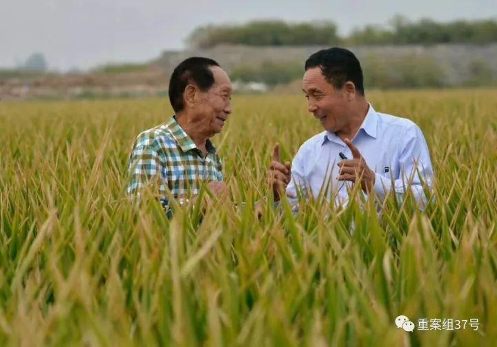 2016年9月杂交水稻之父袁隆平(左)和河北硅谷农科院声誉院长宋福如在邯郸永年百亩水稻高产攻关树模田。河北硅谷农科院供图