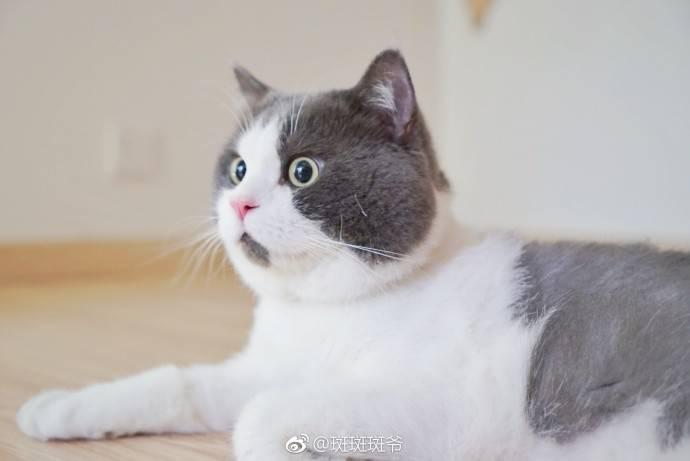 你连名字里猫的表情都不知道,还敢说爱猫?住拉我表情包不要图片