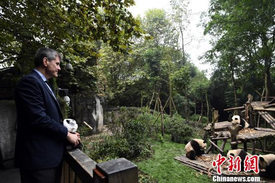 美国亚洲协会高级副总裁汤姆·纳戈尔斯基TomNagorski参观成都大熊猫繁育研究基地。 安源 摄