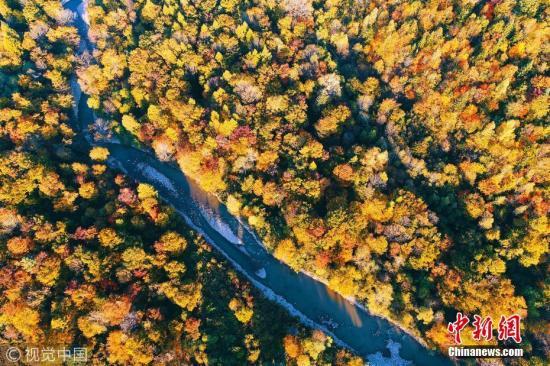 资料图:吉林省长白山林区。 图片来源:视觉中国