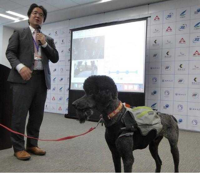 日本研发智能宠物装可推测救助犬干劲 促使犬类高效救援