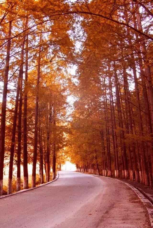 5条陕西深秋最美自驾路线,总有一个让你心动!不看后悔